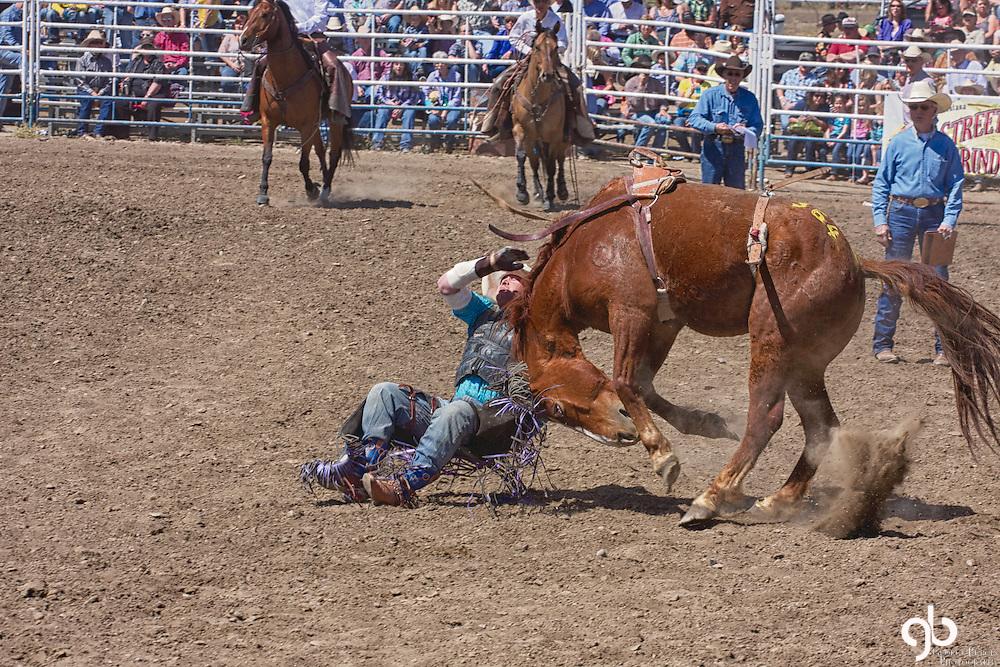 2012 Bucking Horse Sale, Miles City, Montana