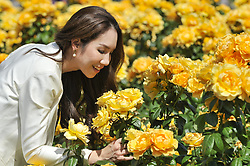 June 14, 2017 - London, UK - London, UK. A woman enjoys looking at the floral displays in Regent's Park in fine weather.  Temperatures are forecast to be even warmer in the capital in the next few days. (Credit Image: © Stephen Chung/London News Pictures via ZUMA Wire)