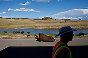Buffalo cause a traffic jam in Yellowstone National Park in Wyoming August 22, 2011.