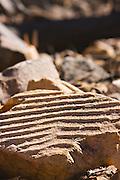 Sand Ripples - South Australia