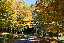Fall colors the woods long a gravel lane in Weathersfield, Vermont