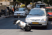 A motor collision between a car and a motorbike at a city intersection, the motorbike is under the front right wheel of the car, Tel Aviv, Israel
