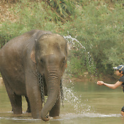 A Laotian mahout gives his elephant a bath in a small creek near Paklay, Laos, Thursday, Feb. 14, 2008.  Laos still uses elephants to log its forrest though their numbers are dwindling.