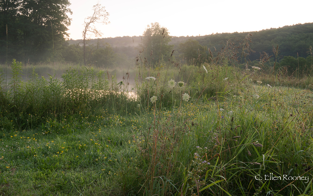 Morning mist rising from a pond surrounded by wild flowers in Alexandra Van Horne's garden in Hauverville, New York State, U.S.A.