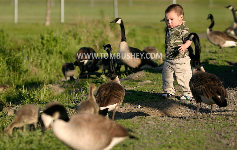 Middletown, N.Y. - A boy gets ready to throw food to the Canada geese at Fancher-Davidge Park on May 20, 2006. ©Tom Bushey