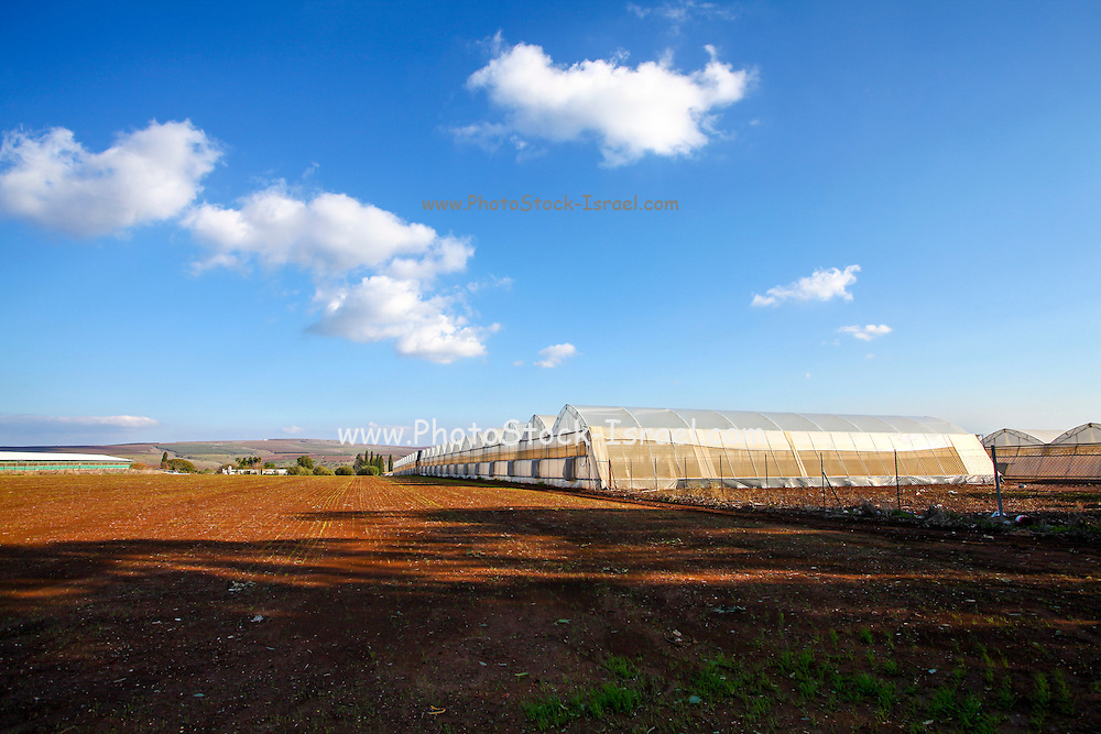 A row of Greenhouses, Photographed in Poria Illit, Lower Galilee, Israel