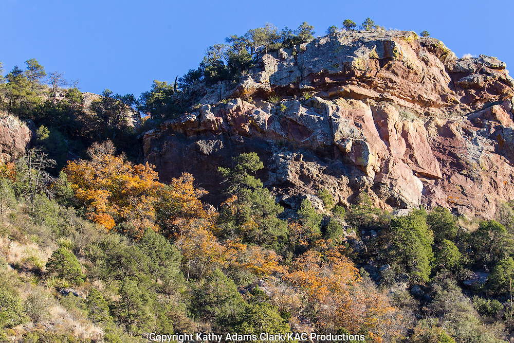 Autumn colors, Big Bend National Park, Chihuahuan Desert, west Texas