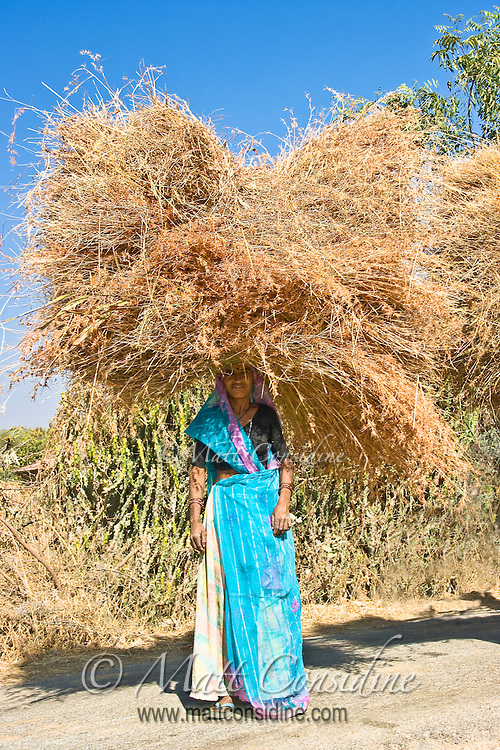 Driving along a small country road in rural Rajasthan, I was captivated by the sight of a group of women carrying huge bundles of hay on their heads.<br /> (Photo by Matt Considine - Images of Asia Collection)