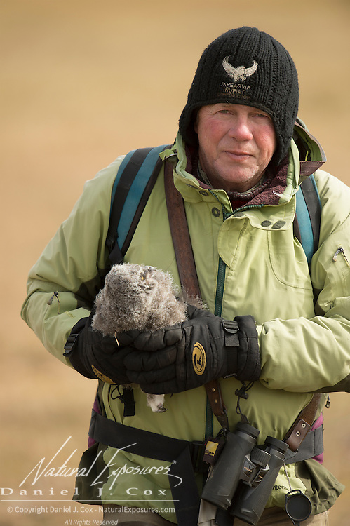 Denver Holt carrying a snowy owl (Bubo scandiacus) chick. Alaska
