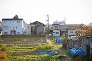 Odlingar ligger i träda på grund av höga strålningsnivåer i marken. Det översta strålningskadade jordlagret är samlat under blå pressening i ett bostadsområde i Fukushima City, Japan