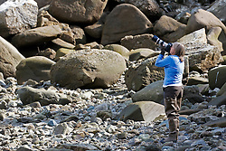 Female photographer photographing birds on a rocky beach, Duck Island, Tuxedni Wilderness, Alaska Maritime National Wildlife Refuge, Alaska, United States of America