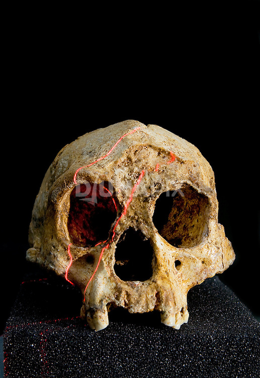 Lasers help produce a 3D scan of the cranium of LB1 - the type specimen for Homo floresiensis, or the Flores hobbit.