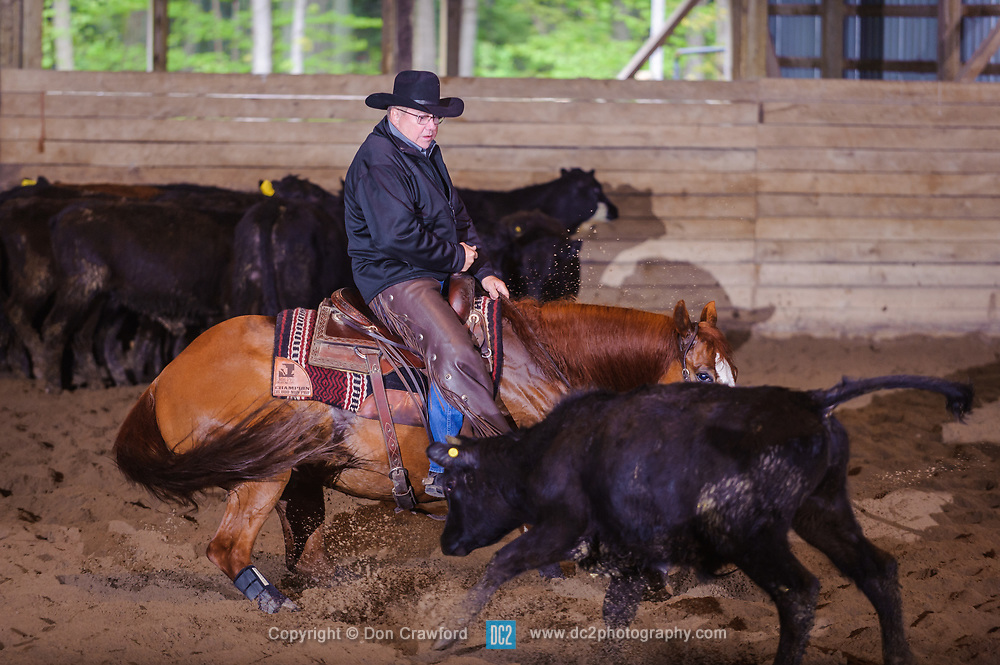 May 21, 2017 - Minshall Farm Cutting 4, held at Minshall Farms, Hillsburgh Ontario. The event was put on by the Ontario Cutting Horse Association. Riding in the 25,000 Novice Horse Non-Pro Class is John Koop on Head Cat owned by the rider.