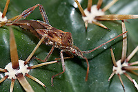 Stink Bugs invade New Jersey Homes. Nikon D200 and 105 mm Macro Lens..