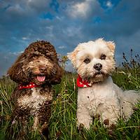 Buddy and Fudge