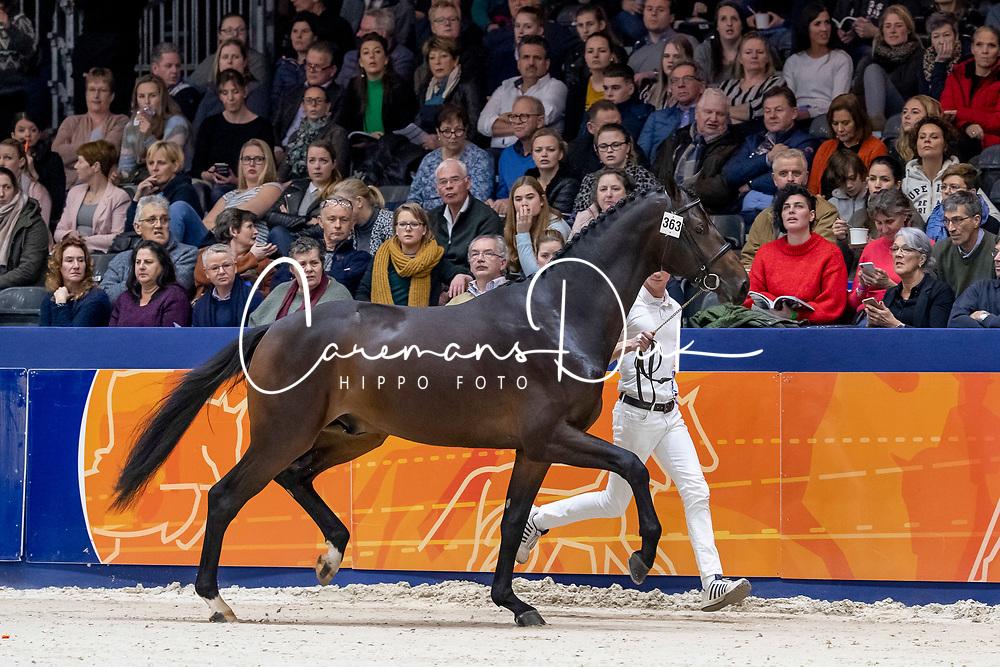 363, Louis Ter Kwincke<br /> KWPN Hengstenkeuring - 's Hertogenbosch 2019<br /> © Hippo Foto - Dirk Caremans<br /> 02/02/2019
