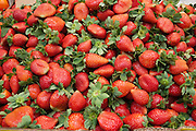 A pile of fresh ripe strawberries