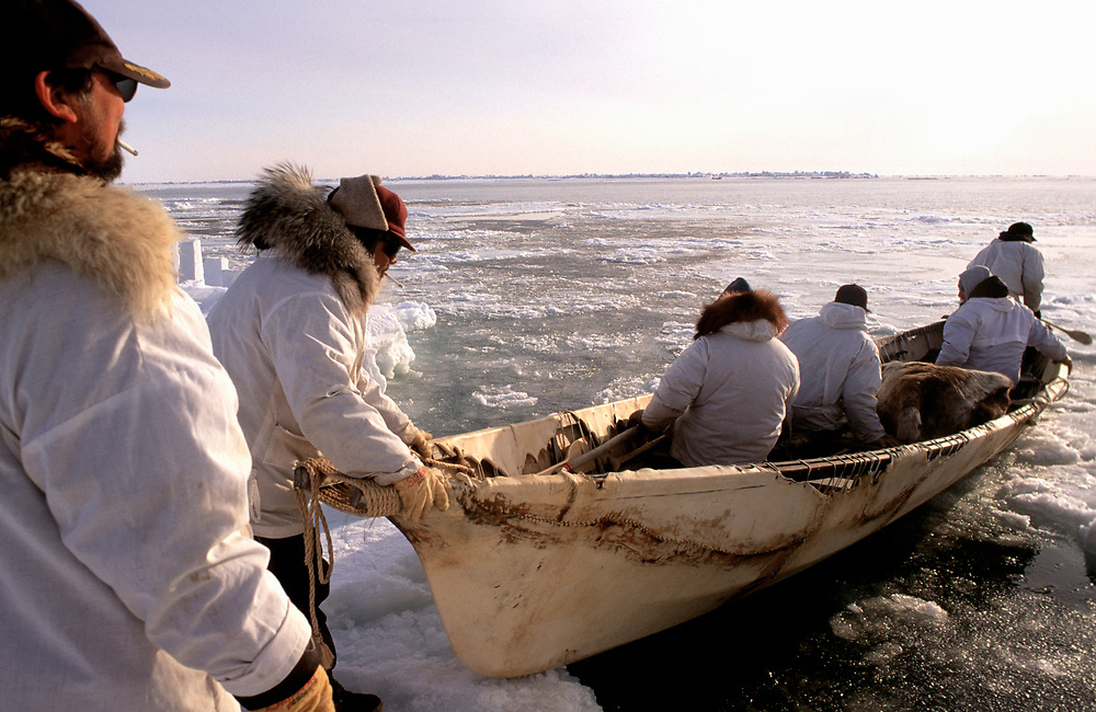 Alaska Native whaling crew setting off in a traditonal umiak to hunt for bowhead whales in the Chukchi Sea, near Barrow