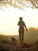 © Licensed to London News Pictures. 15/10/2011. A woman walks her dog in the autumnal sunrise. Richmond, UK. Early morning in Richmond Park, Surrey today 15 October 2011. Temperatures are set to fall across the UK in the coming week as Autumn takes hold. Photo: Stephen Simpson/LNP