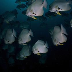 Dive Spot: Razor Island