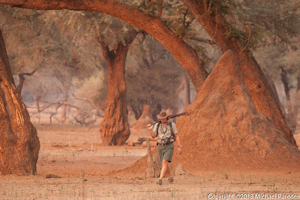 Andrew Smith, a safari guide  in Mana Pools, Zimbabwe is seen near a huge termite mound. Zimbabwe guides are widely regarded as the best in Africa, if not the world, with a very challenging training program and certification process. Only a select few make it through and become guides.