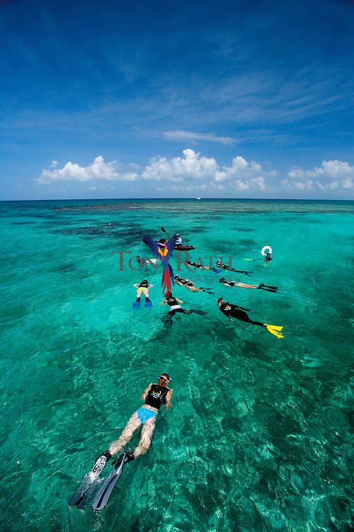 Group of tourist snorkeling off Spanish Lookout Caye with Hugh Parkey's Dive Connection, Belize