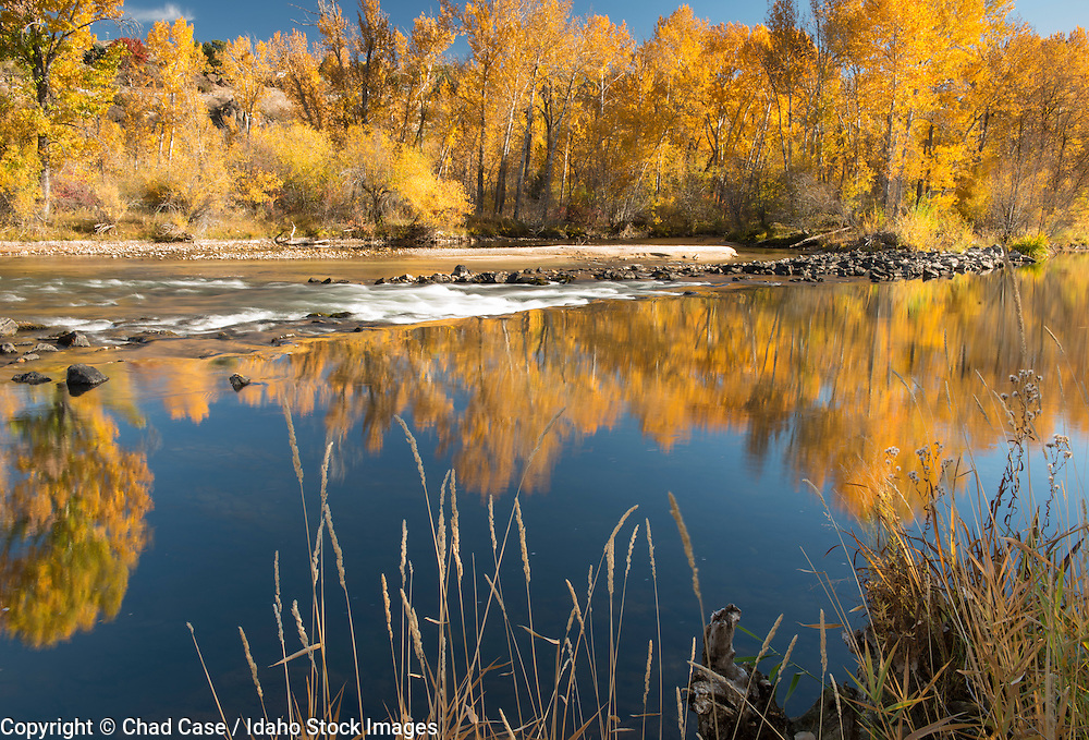 Fall colors along the Boise river with reflections in the water.