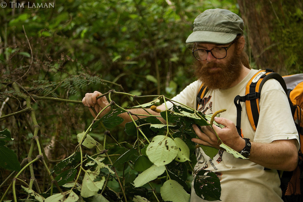 Entomologist Vojtech Novotny hunting for caterpillars in the rain forest...
