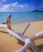 6211-1013CNF ~ Copyright: George H. H. Huey ~ Driftwood on beach at Valley Church Bay, Near Jolly Harbor.  West coast Antigua. Leeward Islands, Lesser Antilles, Caribbean.