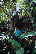 Members of the Associação Mico-Leão-Dourado carry traps into the rainforest of the Poço das Antas Reserve to catch whole groups of the monitored Golden Lion Tamarins. | Mitglieder der Organisation Associação Mico-Leão-Dourado tragen Fallen in den Regenwald des Poço das Antas Reserve, um ganze Gruppen der beobachteten Löwenäffchen einzufangen.