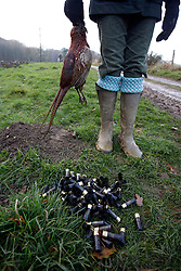 UK ENGLAND GRANTHAM 15DEC11 - A dead pheasant and empty cartridges during the pheasant shooting organised by Belvoir Castle Estate in Leicestershire, England...The shooting of game birds for sport involves the killing of millions of birds every year - over 35 million pheasants and 6.5 million partridges are produced to be used a live targets in the UK each year.....jre/Photo by Jiri Rezac..© Jiri Rezac 2011