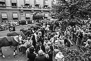 Den Haag - Lange Voorhout 26-06-1980<br /> Paardenlunch bij hotel Des Indes tgv de opening van de Haagse Paardendagen<br /> <br /> © Ronald Speijer