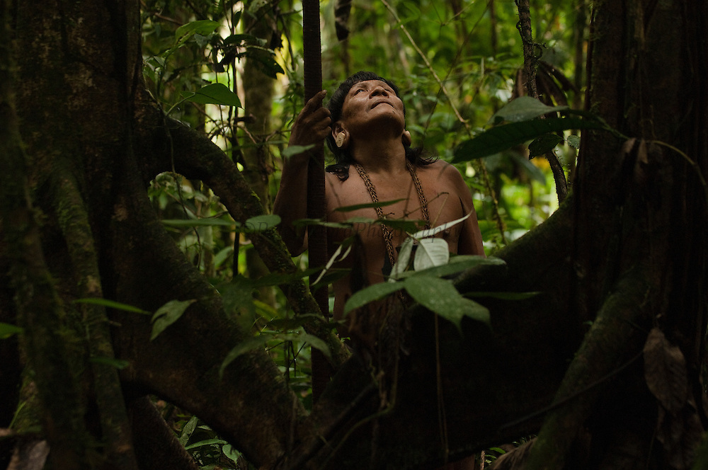 Huaorani Indian - Menga Darita hunting in the forest with his blowgun. Gabaro Community. Yasuni National Park.<br /> Amazon rainforest, ECUADOR.  South America<br /> This Indian tribe were basically uncontacted until 1956 when missionaries from the Summer Institute of Linguistics made contact with them. However there are still some groups from the tribe that remain uncontacted.  They are known as the Tagaeri &amp; Taromanani. Traditionally these Indians were very hostile and killed many people who tried to enter into their territory. Their territory is in the Yasuni National Park which is now also being exploited for oil.