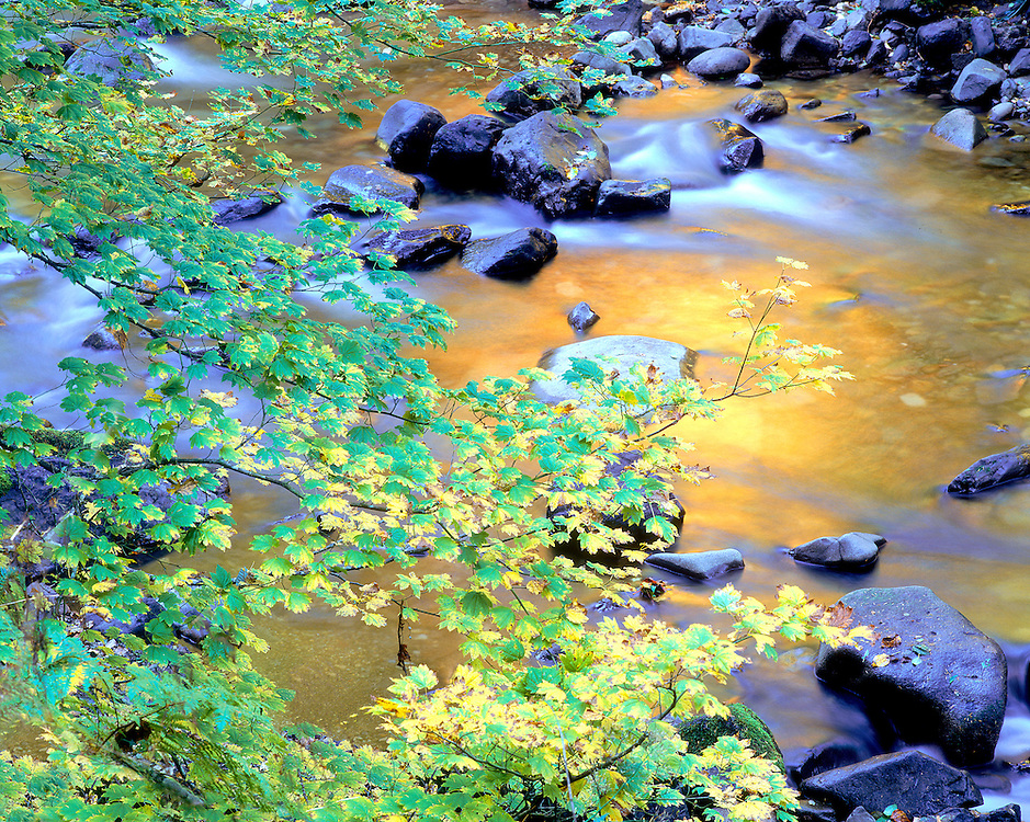 Autumn colors reflecting in Skate Creek, Washington State, USA