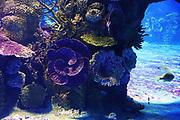 Closeup of fish swimming in a large aquarium