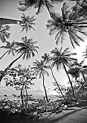 Experimental panorama of palm trees at beach