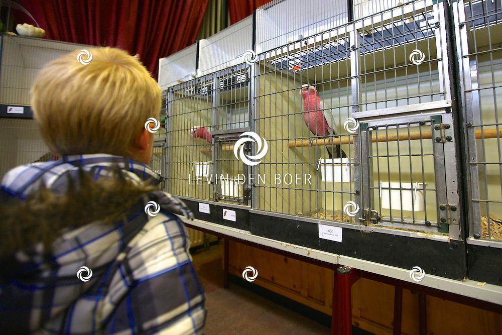 GAMEREN - Vogelvereniging Het Bonte Boertje heeft ruim 650 vogels ingeschreven. Naast de bekende kanaries en parkieten zijn er ook veel tropische en subtropische vogeltjes, waaronder een paar papagaaien en een paar tropische duiven. FOTO LEVIN DEN BOER - PERSFOTO.NU
