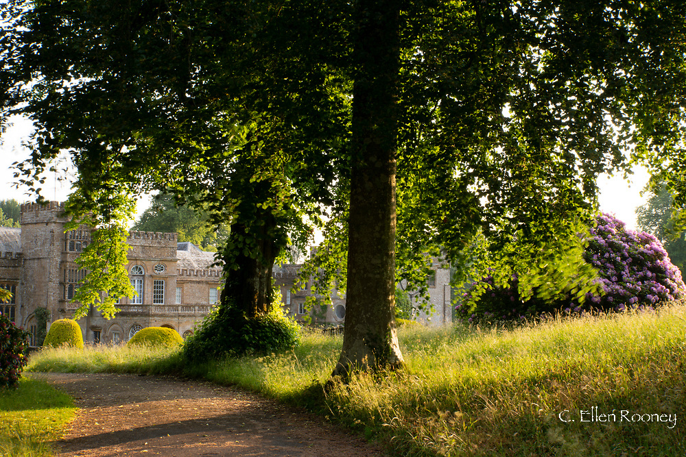 Golden light on meadow grass around Forde Abbey, Chard, Dorset, UK