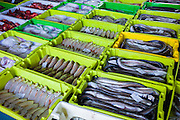 Fresh fish and Conger eel at Confradia de Pescadores de Luarca, Confederation of Luarca Fishermen, at Puerto Luarca in Asturias, Spain