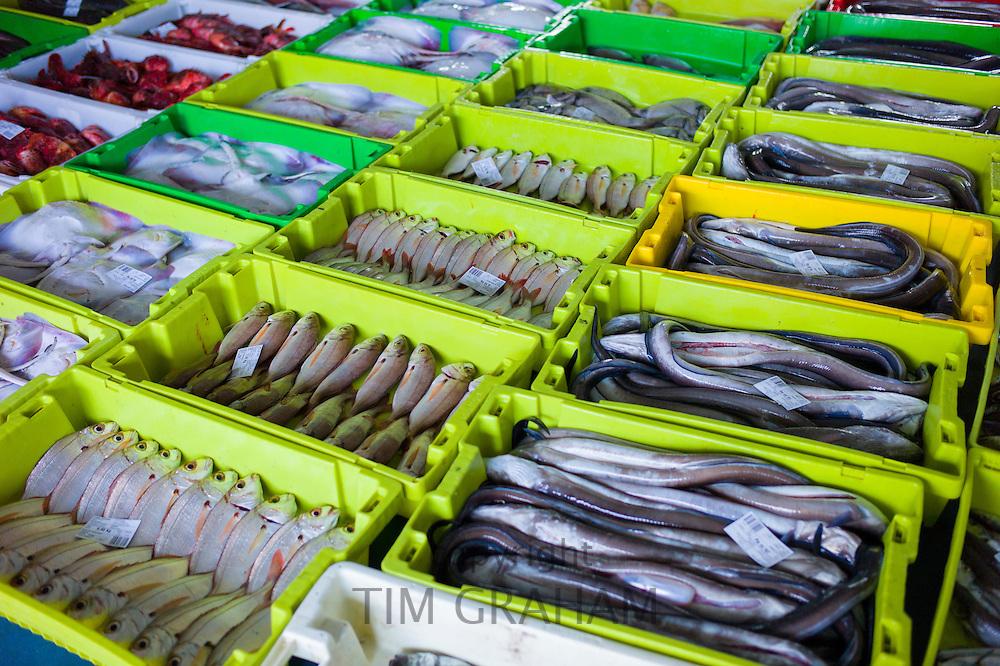 Fresh fish and Conger eel at Confradia de Pescadores de Luarca, Confederation of Luarca Fishermen, at Puerto Luarca in Asturias, Spain