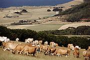 Allen Evan's dairy cattle farm near Dinosaur Cove, Victoria, Australia.