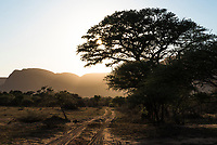 Bushveld track at sunrise, Marataba Private Game Reserve, Limpopo, South Africa
