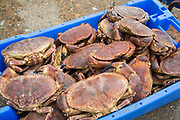 A box of freshly caught crabs ready for market, Folkestone Harbour, Kent, United Kingdom (photo by Andrew Aitchison / In pictures via Getty Images)