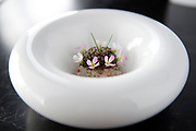 LOS ANGELES, CA- September 8, 2016:  Spot Prawn Jewels: golden ossetra caviar, finger lime.   (Mariah Tauger /  For the Times)