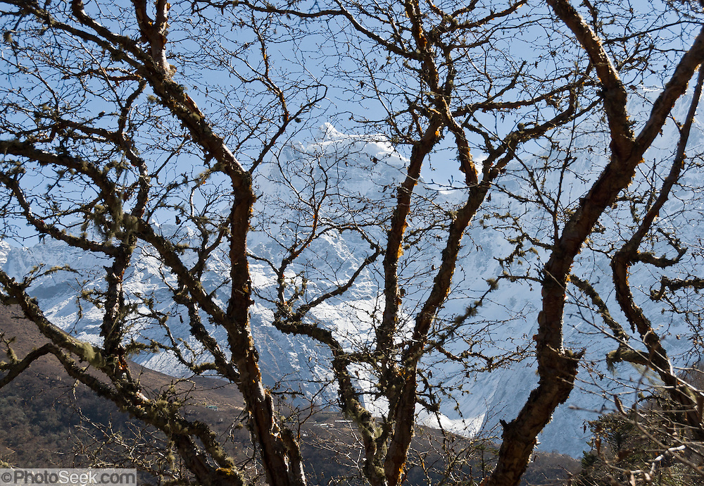 Thamserku mountain (21,680 feet / 6608 meters elevation) rises behind leafless trees across Dudh Koshi valley (or Kosi=river) from Phortse, in the Khumbu District of Nepal, Sagarmatha National Park, in the Himalaya range of Asia. Sagarmatha National Park was created in 1976 and honored as a UNESCO World Heritage Site in 1979.