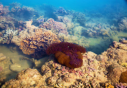 Corals and anemones on Turtle Reef in Talbot Bay, near the iconic Horizontal Waterfalls.