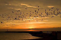 Seagulls flying over harbor at sunset at lake front park in New Buffalo, Michigan