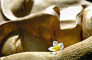 Detail of a golden reclining Buddha statue, with a plumeria (commonly known as frangipane) flower resting on his hand, Luang Prabang, Laos, 2003.