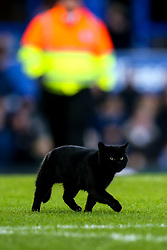A cat invades the pitch at Goodison Park during Everton v Wolverhampton Wanderers - Mandatory by-line: Robbie Stephenson/JMP - 02/02/2019 - FOOTBALL - Goodison Park - Liverpool, England - Everton v Wolverhampton Wanderers - Premier League