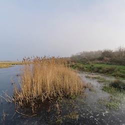 Goeree-Overflakkee, Zuid Holland, Netherlands